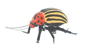 Realistic Yellow Striped Beetle Magnet