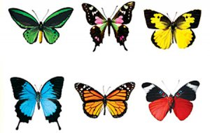 Butterfly Accents Variety Pack (36)