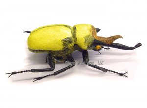 Large Yellow Horn Beetle Magnet